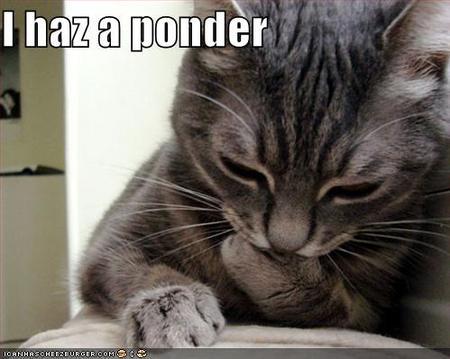 ponder cat