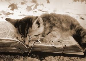 cat_asleep_on_book